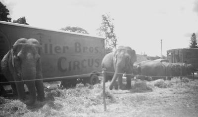 Elephants of the Biller Brothers' Circus (1949)