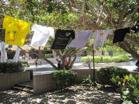 Image of Clothesline Project display with several t-shirts