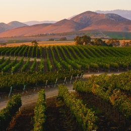 Image of Santa Ynez Valley Vineyard