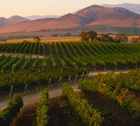 Image of Santa Ynez Valley Vineyard