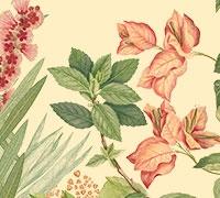 Banks Florilegium